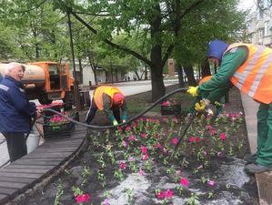 Красноярск попрощался с первыми цветочными скульптурами: петуха и медведя не вернут