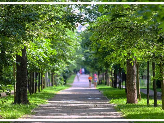 зеленая аллея в Екатеринбурге
