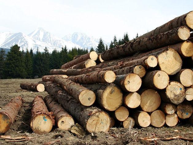 Мир продает технологии, Россия — нефть и лес. Что происходит на рынке мировой торговли