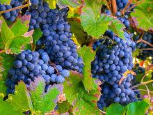 Вопросы на фоне конфликта: Роспотребнадзор готовит запрет на ввоз грузинского вина