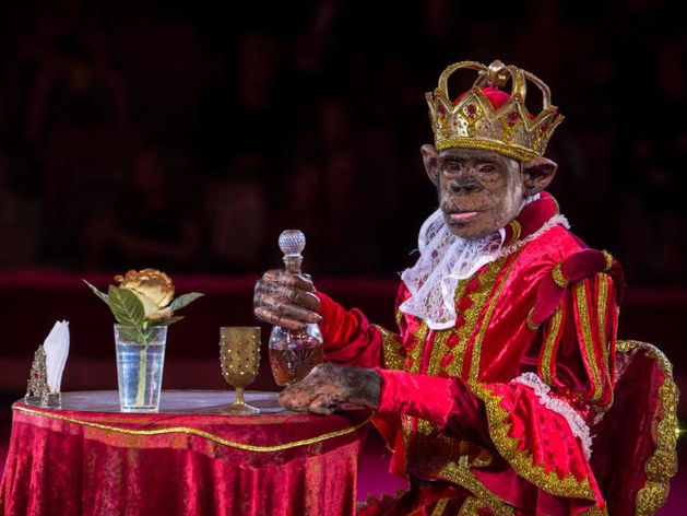 В Екатеринбурге продолжается «Шоу звезд цирка» с участием артистов Цирка Юрия Никулина