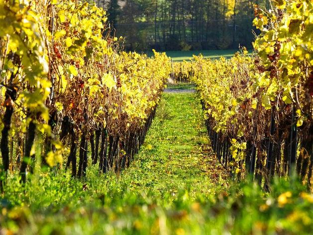 Делайте запасы: правительство поднимет акцизы на вино почти вдвое