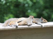 Бесконечная усталость? Вас спасут бесконечные перерывы. Как отдыхать на работе