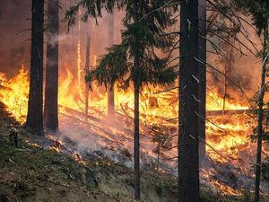 Гринпис в России присоединился к движению «Потушите пожары в Сибири»