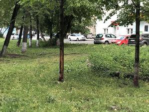 «Они заражены». В центре Челябинска новый скандал из-за вырубки десятков деревьев