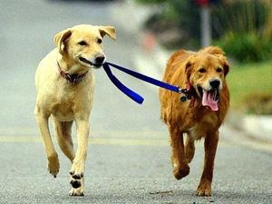 Прокуратура потребовала у мэрии Красноярска организовать площадки для выгула собак