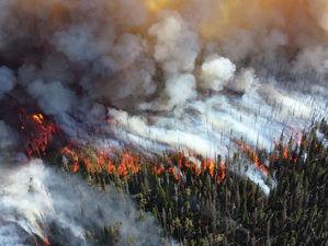 Пожары в Сибири — проблема планетарного масштаба. — Евгений Пономарев, эколог