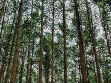 Администрация Красноярска ищет новых подрядчиков по патрулированию городских лесов