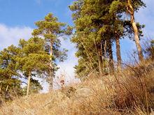 В Каштакском бору продают землю под стройку особняков. Что говорят в Минэкологии