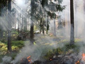 Красноярскому краю выделяют 733,1 млн рублей для тушения пожаров из резервного фонда