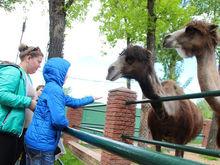 Дети оценили. Нижегородский частный зоопарк вошел в десятку самых интересных в России
