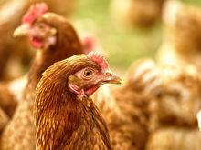 Очистные или птицефабрика? Минэкологии ищет виновных в запахе фекалий в Челябинске