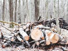 Компания Бойко выиграла аукцион по сносу деревьев под четвертый мост
