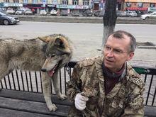 Владелец волка, покусавшего ребенка в парке, открыл фотостудию с животными в Челябинске