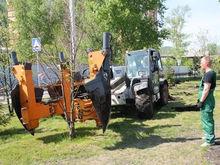 Неприжившиеся деревья заменят в Красноярске