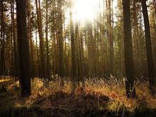 S7 собрала деньги на высадку миллиона деревьев в сгоревшей тайге