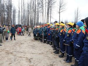 Красноярские студенты, общественники и звезды шоу-бизнеса посадили 80 тыс. сеянцев сосны
