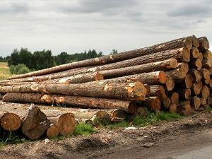 Куда уходит красноярский лес: озвучены объемы вывозимой на экспорт древесины