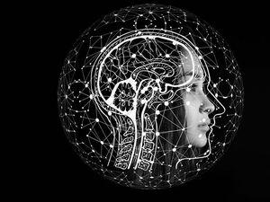 Татьяна Черниговская: «Мозг нам или соратник, или враг, или соучастник»
