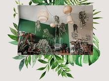 В Красноярске открылся первый тропический шоурум-фотостудия с «санаторием» для растений