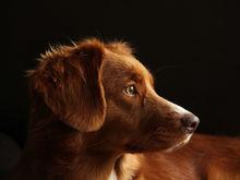 В Красноярске ищут ещё одного подрядчика для отлова бездомных собак
