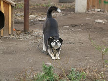 Бродячие собаки в Красноярске: варианты решения проблемы