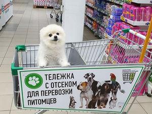 Теперь с собакой в красноярские супермаркеты можно: эксперимент признан успешным