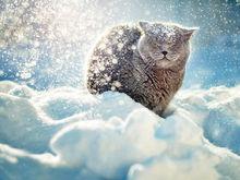 Красноярск ожидает резкое похолодание и сильный ветер