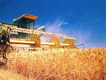 Аграрии Красноярского края поставили рекорд по урожайности в Сибири