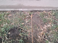 Красноярские депутаты возмутились озеленению Взлетки «прутиками»