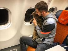 «Я, МЫ, кот Виктор»: красноярцы обсуждают историю с толстым котом