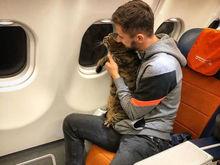 «Это решение пахнуло СССР. Толстый котик на борту самолета вряд ли кому-то угрожал»