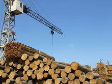 В Красноярском крае приостановили деятельность 25 лесных предприятий