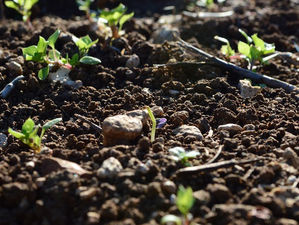 Мышьяк и нитраты. Россельхознадзор заявил о загрязнении почвы на Южном Урале