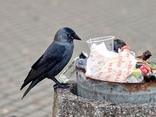 Кому достался лот на перевозку мусора за 1,3 миллиарда?