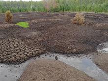 На Южном Урале куриному агрохолдингу пришлось выплатить 18 млн за выбросы помёта в полях
