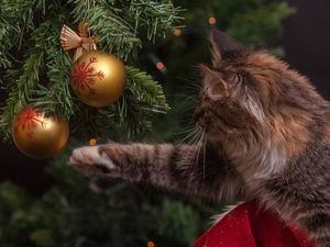 31 декабря объявили выходным днем в Свердловской области