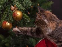 Жители Челябинска потратят на подарки к Новому году по 13,3 тыс. руб. ОПРОС