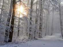 Антимонопольщики высоко оценили приведение в порядок лесной отрасли Красноярского края