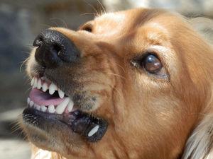 Отлов собак в Красноярске выстроен неэффективно: прокуратура вынесла представление мэру