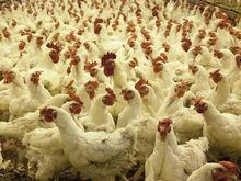 Ущерб на 15 млн. Нижегородскую птицефабрику оштрафовали за уничтожение плодородной почвы