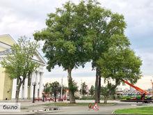 Главой Калининского района Сергеем Колесником заинтересовалась полиция