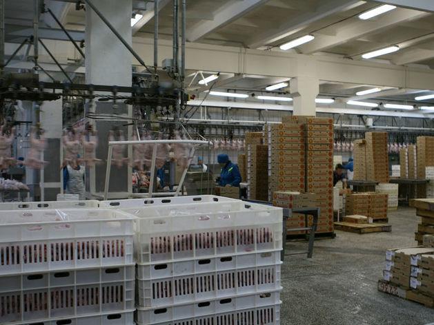 Уральская птицефабрика накормит Китай