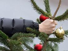 Ёлочка, сгори: красноярцы ответили, куда денут новогоднюю елку