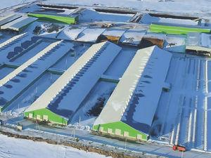 Инвестиции почти 1,5 млрд рублей: в Красноярском крае запускают животноводческий комплекс