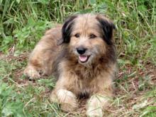 «Будем их социализировать». На беспризорных собак в 2020 г. город выделит 32 млн руб.