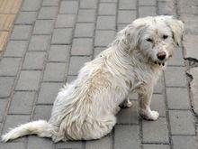 Предпринимателей Красноярска обяжут стерилизовать живущих на стройках и промбазах собак