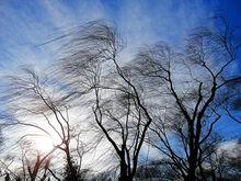 Ветер, дождь, оттепель: какая погода ожидает Красноярск