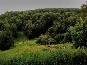 Особое место в проекте благоустройства парка «Приокский» уделено доступной среде