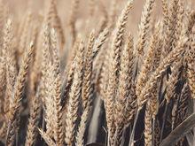 Красноярские аграрии получили льготный тариф на вывоз зерна